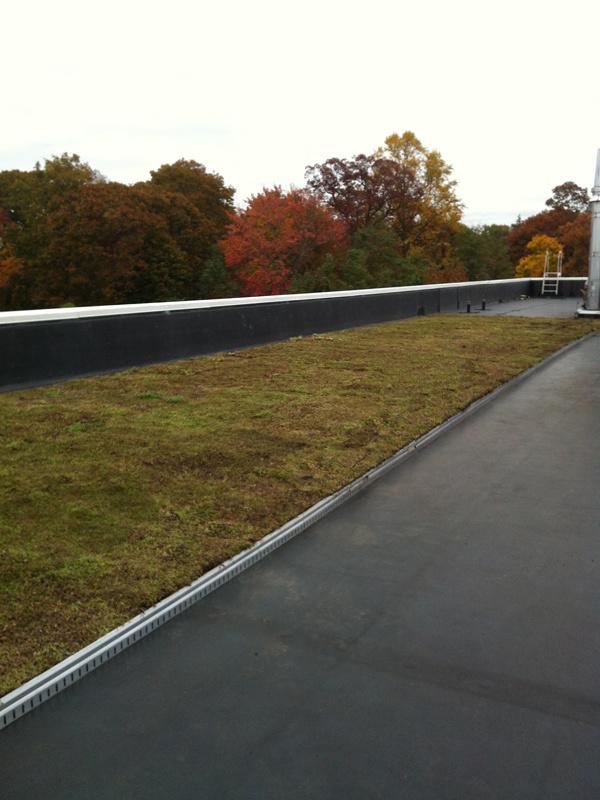Green-Roof-SUNY-OWB-Nov-2012