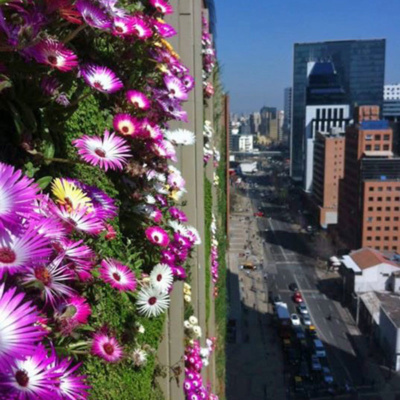 Intercontinental Chile 2016 green living wall