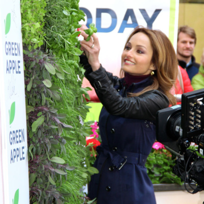 herb green wall on the today show tv