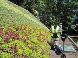 green living roof panel sloped roofs