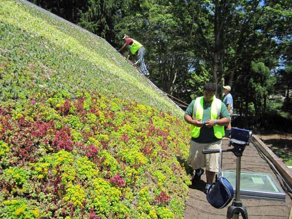 Good Green Living Roof Panel Sloped Roofs