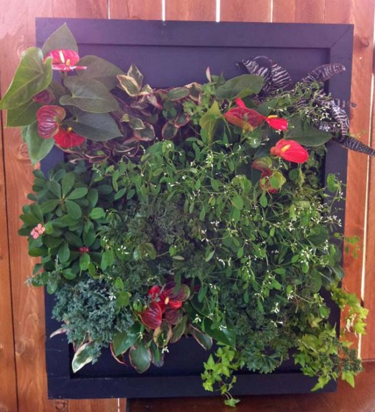 green living walls installer company