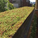 green living walls installer company