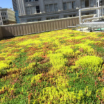 green living roofs installer company