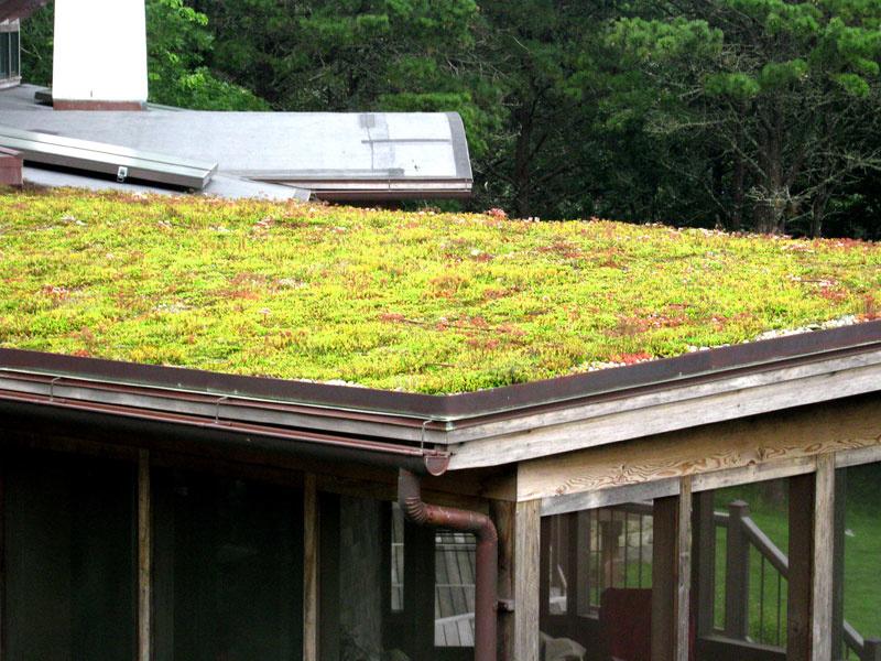 green living roofsinstaller company
