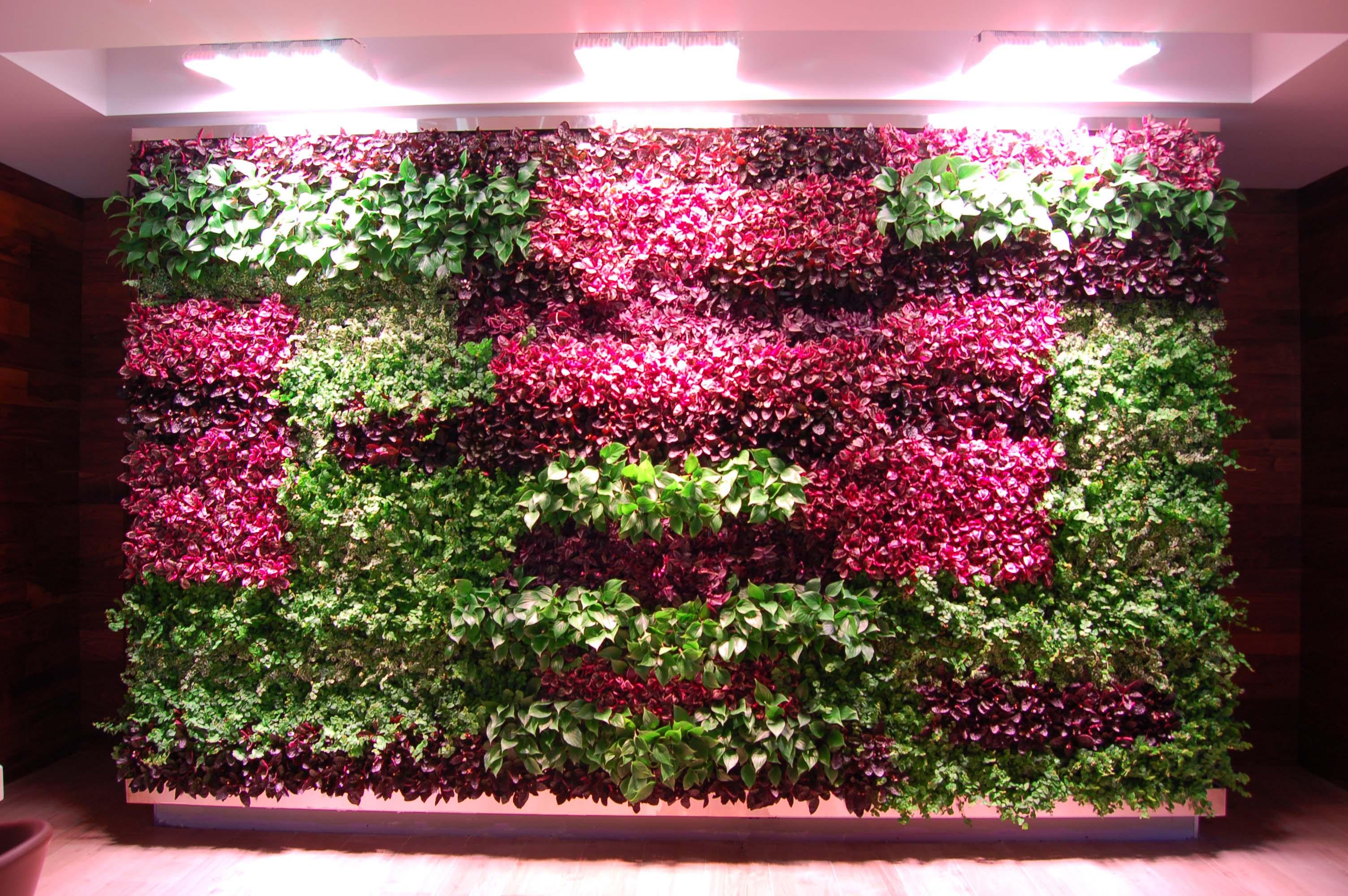 La Mar Miami Green Living Wall Highlight Of Peruvian