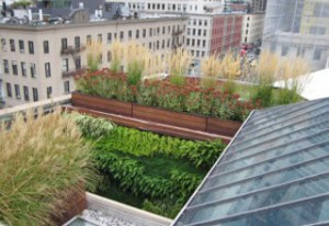 green living roofs installers