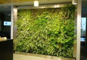 green living walls installers