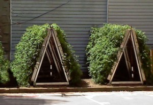 urban farming vertical farms