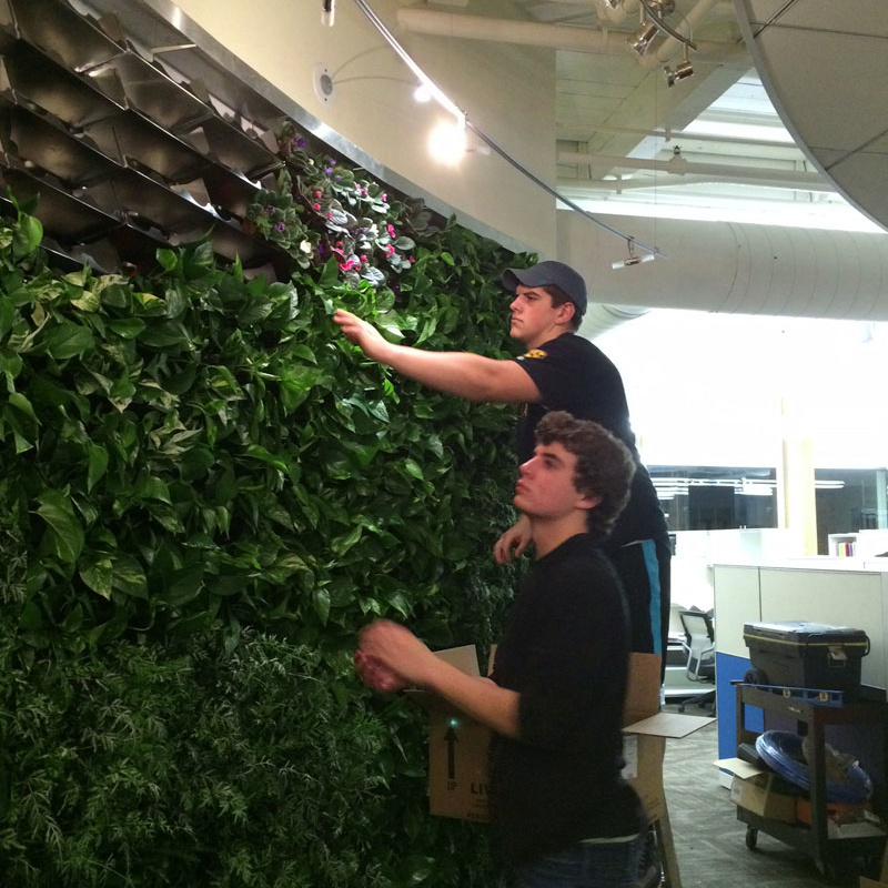 green living walls roofs education training