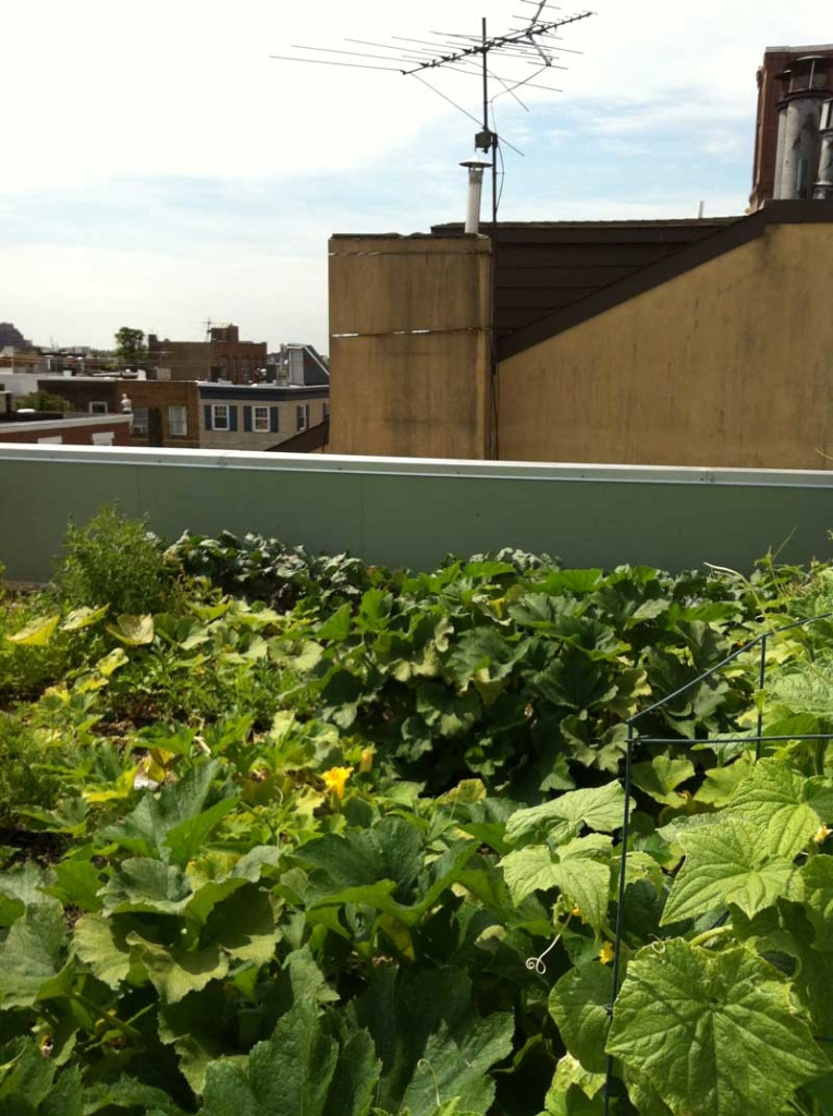 Roof Farms Green Living Technologies